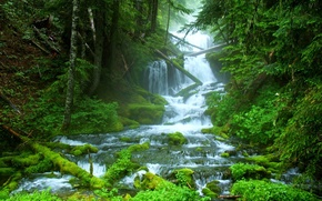 Picture forest, nature, mountain river