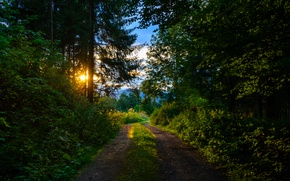 Picture trail, morning, Forest, forest, morning, path