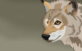 Picture animal, figure, wolf, illustration