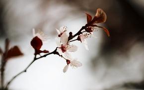Picture macro, flowers, photo