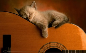 Picture cat, guitar, kitty