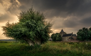 Picture tree, Netherlands, Holland, Oosterbeek, the old Church