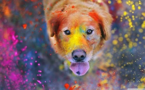 Picture colorful, eyes, dog, dust, color, bokeh, animal, paint, funny, cute, situation, looking up, tongue, nose, …
