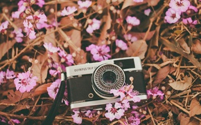 Picture flowers, camera, petals, the camera, lens, pink