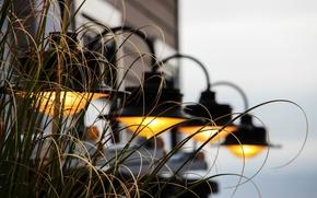 Wallpaper background, grass, lamp