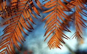 Picture leaves, light, nature, windcatchers