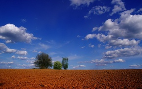 Picture clouds, trees, Field