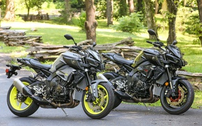 Picture wallpaper, logo, grass, Yamaha, trees, nature, park, motorcycle, leaves, asphalt, superbike, branches, trunk, konoha, strong, …