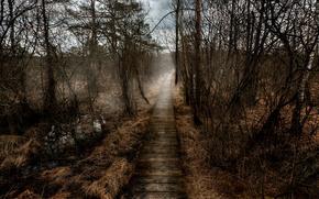 Picture fog, Autumn, track, autumn, fog, path