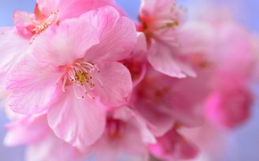 Picture flowers, spring, petals, garden
