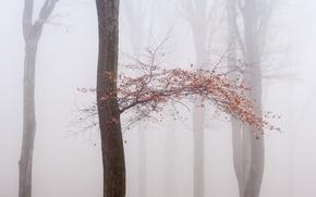 Picture autumn, fog, tree
