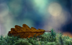 Picture autumn, macro, sheet, moss, dry, bokeh, November