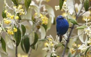 Picture flowers, branch, bird