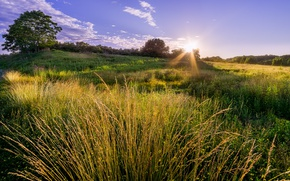 Picture the sky, grass, landscape, nature, meadow