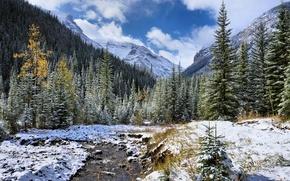 Picture trees, landscape, mountains, river
