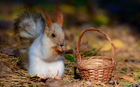 Picture Autumn, Leaves, Basket, Protein