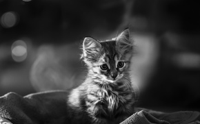 Picture baby, black and white, kitty, monochrome