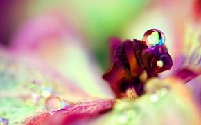 Wallpaper flower, drops, large