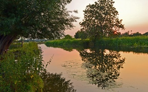 Picture grass, trees, sunset, lake, the evening