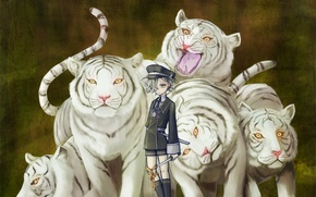 Picture boy, white tigers, Touken Ranbu, Gokotai