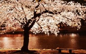 Wallpaper flowers, tree