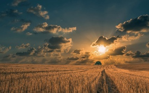 Picture field, the sun, clouds, tree