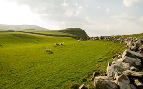 Picture the sky, grass, stones, sheep, Northern Ireland, northern ireland
