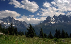 Picture flowers, meadows, Alps, mountains, tops, summer, clouds, the sky, grass, forest