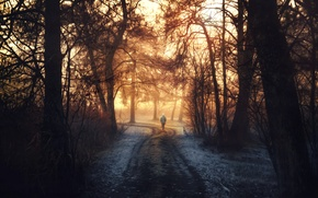 Picture forest, trees, treatment, passerby, Into the light