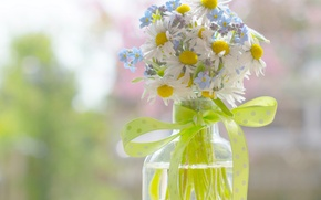 Picture bottle, chamomile, bow, ribbon, a bunch, bokeh, forget-me-nots, braid