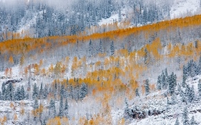 Picture winter, autumn, forest, snow, nature, paint