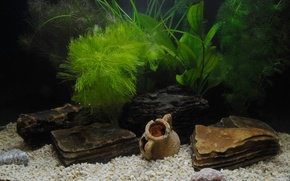 Picture grass, aquarium, shell, pebbles, antique