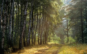 Picture Road, Trees, Forest, Rays, Birch