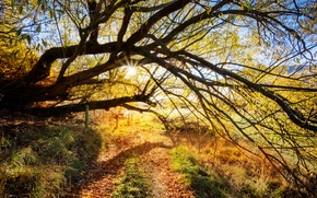 Picture road, the sun, rays, tree, branch