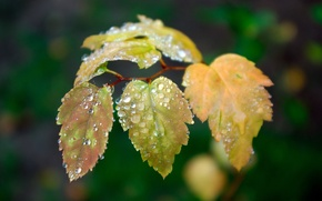 Picture leaves, drops, green, 153