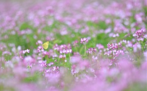 Picture summer, grass, macro, pink, ease, butterfly, glade, plants, blur, clover