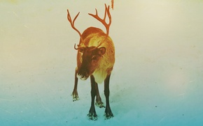 Picture winter, Deer, New year, 2014, Noyabrsk, YANAO