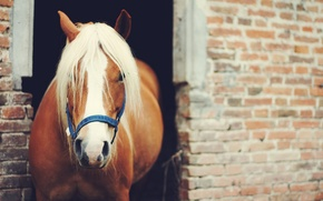 Picture animal, horse, horse