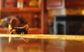 Picture cat, reflection, table, room, blur, spying
