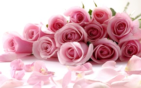 Picture Pink, Rose, Romantic