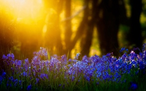 Wallpaper light, flowers, nature