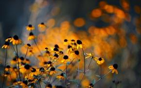 Picture flowers, glare, yellow, rudbeckia