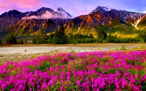 Picture the sky, clouds, flowers, mountains