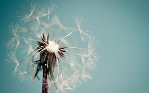 Picture flower, macro, background, dandelion, blue, widescreen, Wallpaper, wallpaper, widescreen, background, macro, full screen, HD wallpapers, …