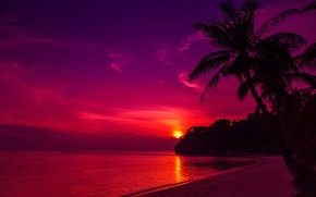 Picture sand, sea, beach, the sky, the sun, sunset, palm trees, shore