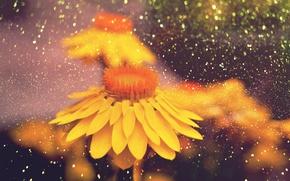 Wallpaper yellow flowers, petals, bokeh, flowers, stem
