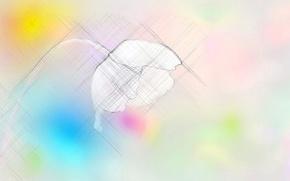 Wallpaper color, flower, background