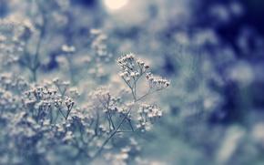 Wallpaper macro, light, flowers, day, bokeh, field, plant, glare, grass