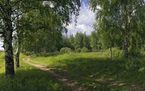Picture road, summer, nature, birch