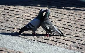 Picture love, romance, the world, kiss, pigeons, love, peace, kiss, romantic